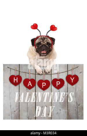 Cute pug puppy dog leaning on wooden fence of used scaffolding wood with red hearts and text happy valentines day, - Stock Photo