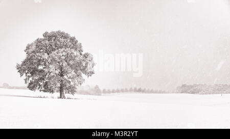 A centuries old oak in the center of a blizzard. Schleswig-Holstein, Germany - Stock Photo