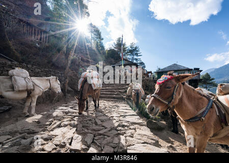 Horses and donkeys outside of Lukla, Nepal - Stock Photo
