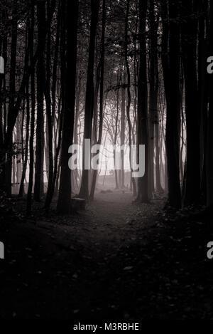 A path through the fog, Rügen in autumn. - Stock Photo