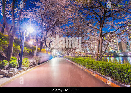 Seokchon Lake park at night and cherry blossom of Spring in Seoul, South Korea - Stock Photo