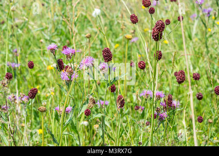 sunny colorful closeup shot of dense wildflower vegetation at spring time - Stock Photo