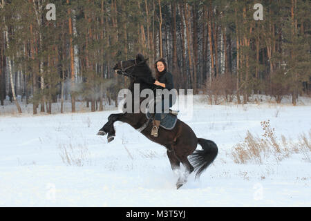 Young woman rids on black horse in snowy countryside - the steed stands on its hind legs - Stock Photo