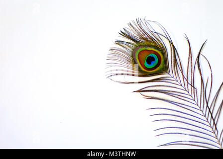 shining bright and colorful peacock feather on white background Stock Photo