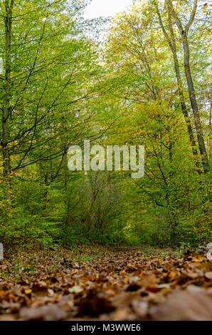 A Day in the forest - Stock Photo