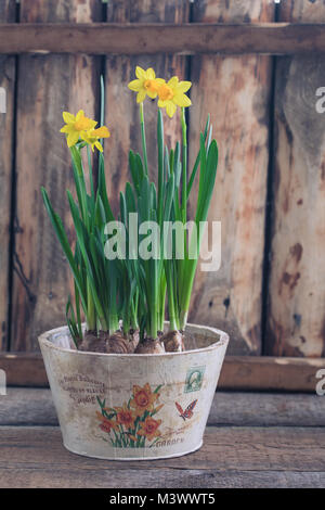 Spring yellow narcissus in vintage pot over the wooden background with a copy space. Easter postcard concept. Toned. - Stock Photo