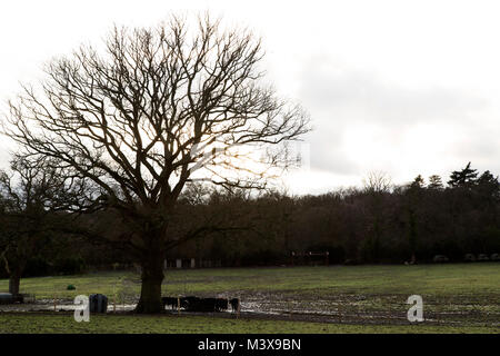 Farmland at Cadnam in the New Forest, England. A tree rises from the field. - Stock Photo