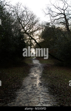 A trail in the New Forest, England. The footpath is muddy due to winter rain. - Stock Photo