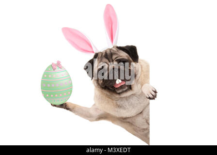 Happy Easter bunny pug dog with bunny teeth and pastel green easter egg, isolated on white background - Stock Photo