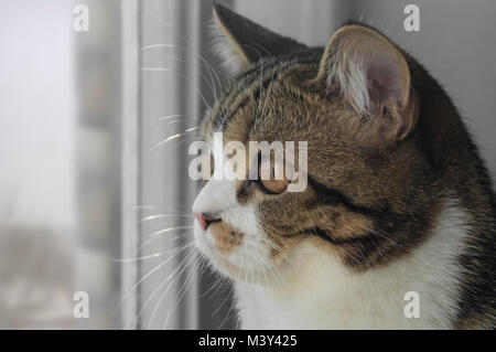 The cat looks out the window - Stock Photo