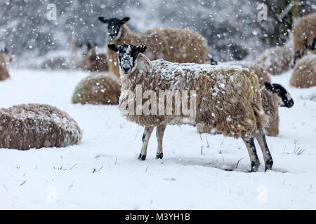 Marwood, Teesdale, County Durham. UK. Tuesday 13th February 2018. UK Weather. With a Met Office yellow weather warning - Stock Photo