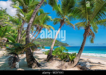 Coconut Palm trees on the sandy beach - Stock Photo