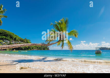 Coconut Palm tree over the sandy beach - Stock Photo