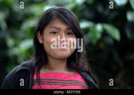 A Ngäbe-Bugle teenaged girl working on a coffee plantation in Boquete, Chiriquí Province, Panama. - Stock Photo