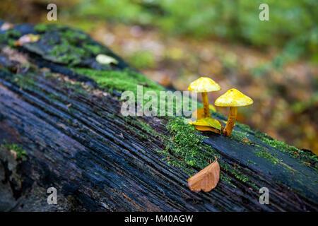 Pilze im Herbst - Stock Photo
