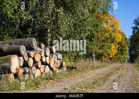 Waldweg mit Holzpolter im Herbst - Stock Photo