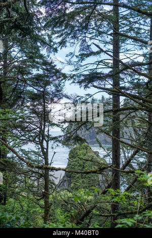 A view of Ruby Beach through the coastal forest of Washington - Stock Photo