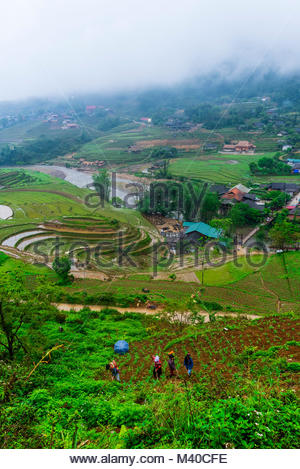 Farming, Muong Hoa Valley, near Sapa, northern Vietnam. - Stock Photo
