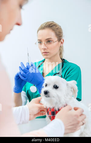 Female vet prepares to vaccinate the dog. Dog waits with its owner. Vertical view - Stock Photo