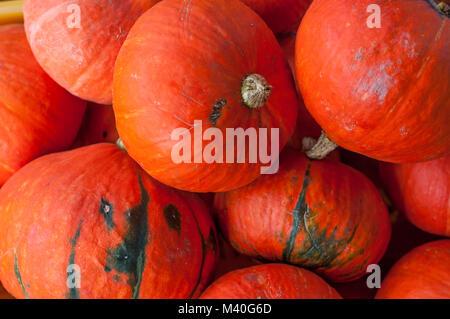Red kuri hokkaido squash pumpkin background - Stock Photo
