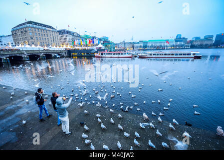 Seagulls feeding on the Inner Alster Lake in Hamburg, Germany, Europe, Möwen füttern an der Binnenalster in Hamburg, - Stock Photo