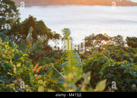 Panoramic coast view, Banana tree, palms and rainforest plants, hills and blue sea. Nature in Asia. Thailand, The - Stock Photo