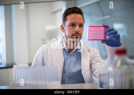 Male scientist looking at microplate in a laboratory - Stock Photo