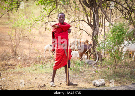 TANZANIA, AFRICA-FEBRUARY 9, 2014: Young Masai herders  herd and protect their goats in savannah on February 9, - Stock Photo