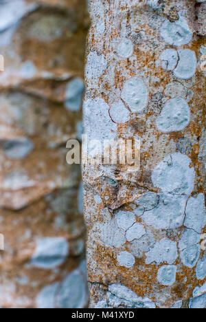 A closeup photo showing the textured detail of the bark of two tree trunks - Stock Photo