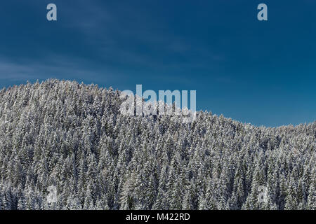 Snow capped treetops and blue sky - Stock Photo