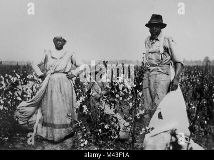 African American sharecroppers work a cotton field in the MIssissippi delta, ca. 1910. - Stock Photo
