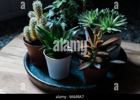 Succulents and tiny plants in natural light - Stock Photo