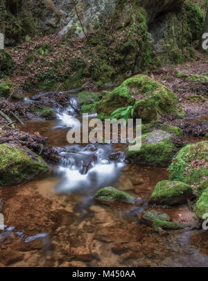 Monochrome outdoor long exposure of a crystal clear small stream/creek in winter/fall forest with fern stones,trees,moss,autumnal - Stock Photo