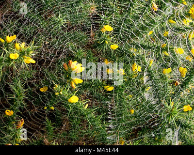A Spider Web On A Gorse Plant Covered In Water Drops In
