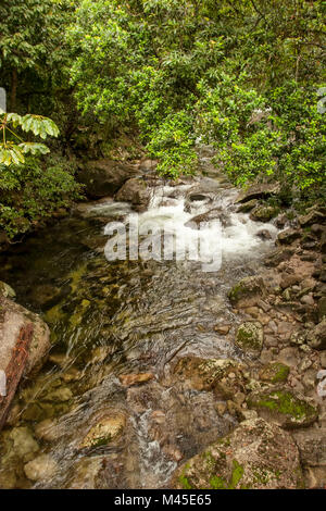Mossman river at Mossman Gorge,  located in the Daintree National Park -  North Queensland - Australia  rushing - Stock Photo