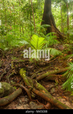 Clearing and sunlit trees in Mossman Gorge located in the southern part of Daintree National Park, North Queensland, - Stock Photo
