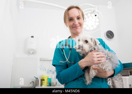 Vet carrying terrier poodle mixed breed dog - Stock Photo