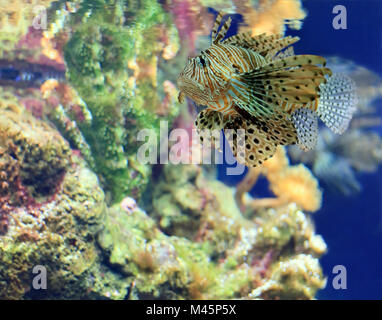 tropical Fish on a coral reef - Stock Photo