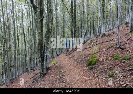 E-Mountainbiker rides on a slope in the forest,Bogno,Ticino,Switzerland - Stock Photo