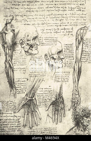 Anatomical drawing, studies of the muscles of the face and arm, drawn by Leonardo Da Vinci, 1510 - Stock Photo
