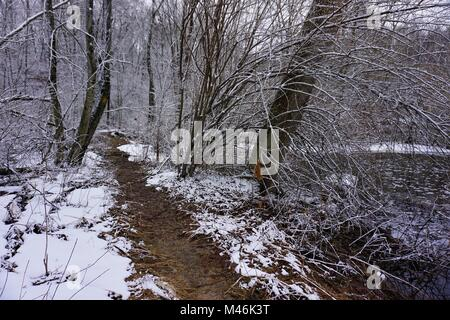 Winter Woodland in North America - Stock Photo