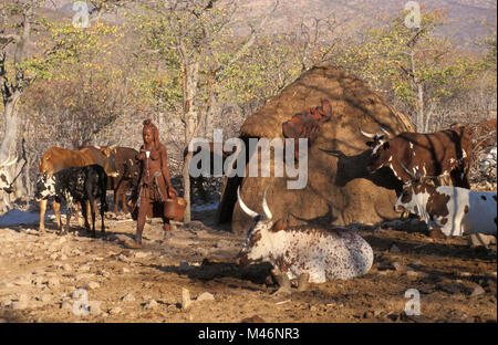 Namibia. Kaokoveld, near Opuwo. Himba tribe woman carrying pails of milk after milking cows. - Stock Photo