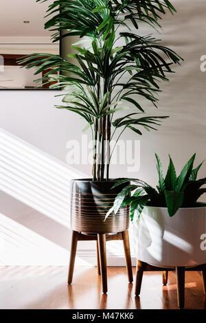 Pair of indoor plants in ceramic pots on wooden stands