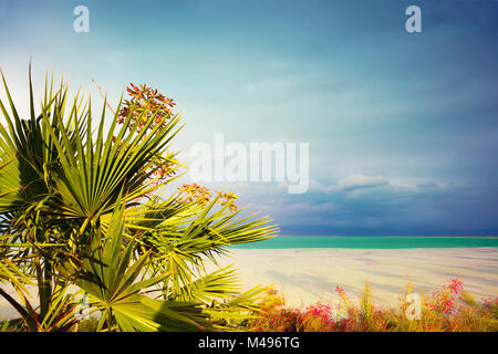 Dead sea salty shore with palm trees. Israel - Stock Photo