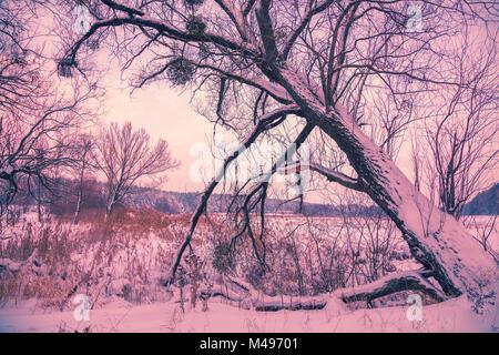 Snowy rural landscape. Tree near frozen lake - Stock Photo