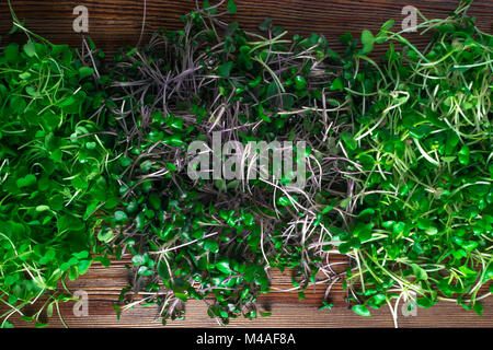 mix of green grass sprouts, arugula, red cabbage, radish - Stock Photo
