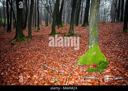 Traumatic forest - Stock Photo