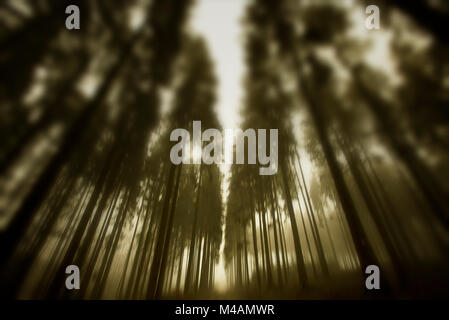 Traumatic path in a forest - Stock Photo