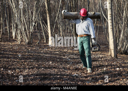 Lumberjack woodcutter with chainsaw carrying logs of big tree in the autumn forest - Stock Photo