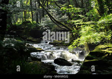Golitha falls on the river Fowey flowing through woodland in Cornwall UK - Stock Photo